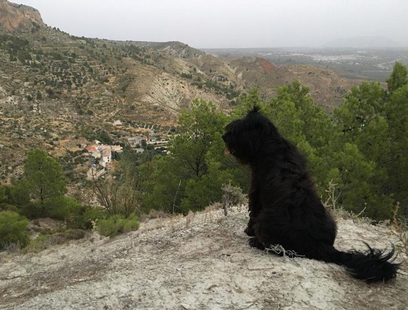 Casa Cueva admieten mascotas